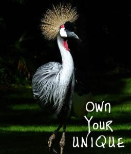 Own-Your-Unique